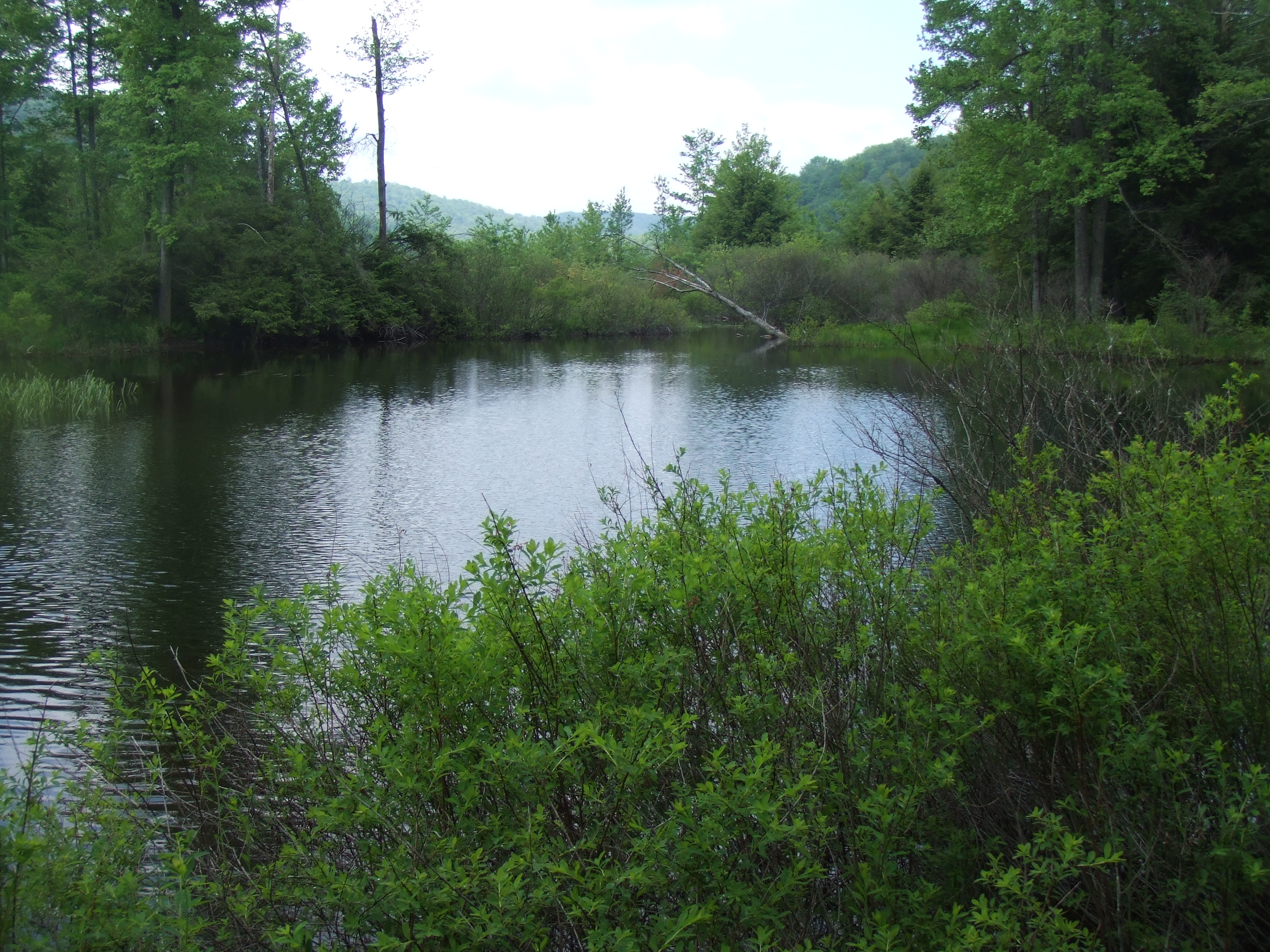 Fly Fishing for Native Brook Trout Guided Tours   Northeast PA Fly Fishing